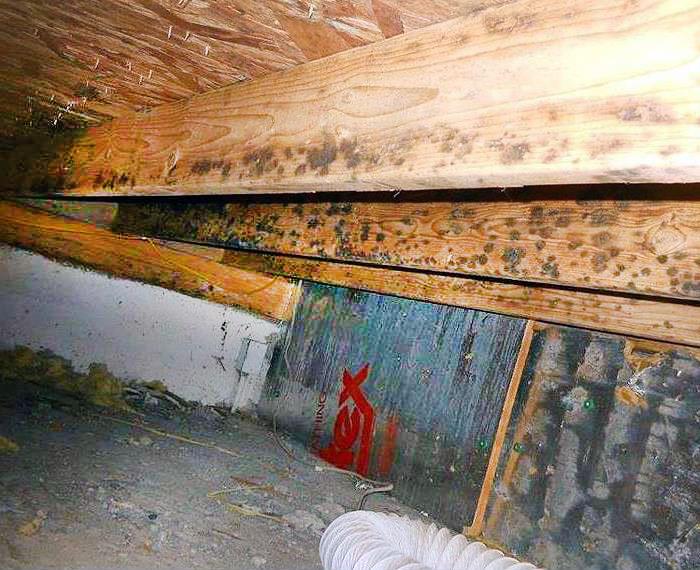 Moldy Basement Wood
